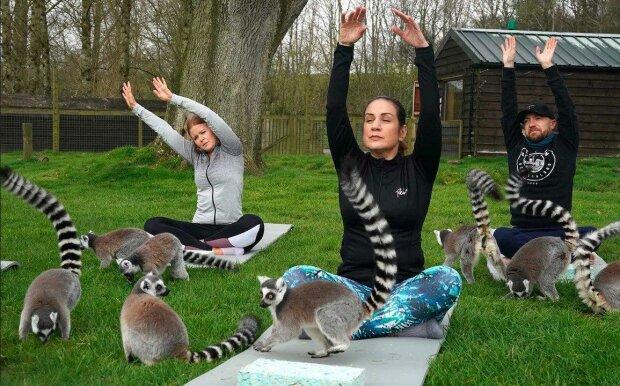 """""""Nejlepší ozdravná procedura"""": lekce jógy s lemury na čerstvém vzduchu"""