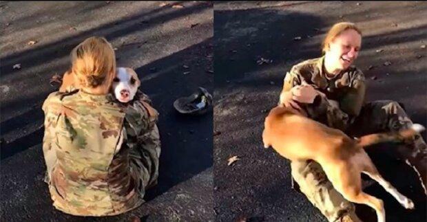 Dojemné záběry ze setkání paní se svým psem po 2 letech odloučení