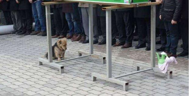 Mužovi se zlomilo srdce, když si uvědomil, kam každý den chodí jeho pes