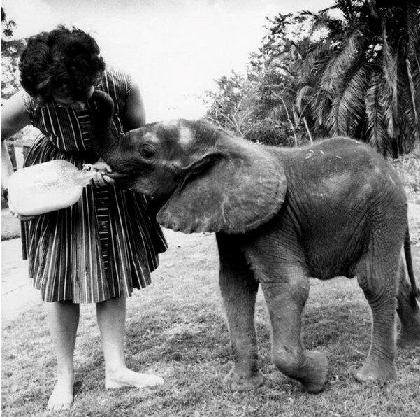 Příběh o rozrušenem přátelství mezi člověkem a slony