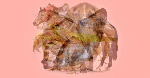 Jaké zvíře jste viděli na tomto obrázku jako první: takové jsou vaše silné strany