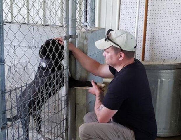 Pes. Foto: snímek obrazovky laykni.com