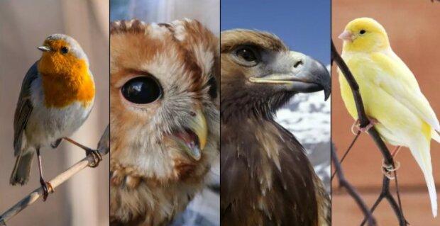 Psychologický test: vybraný pták vám odhalí, co si o vás ostatní myslí
