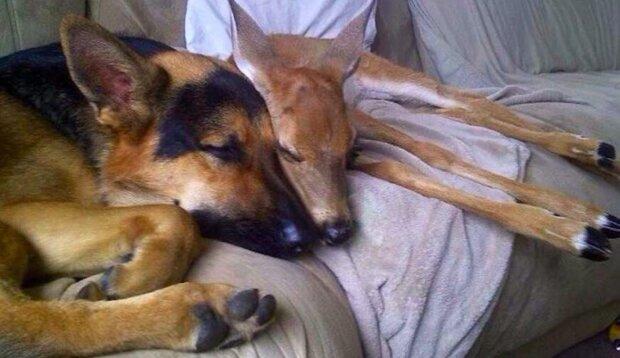 """""""Neuvěřitelné přátelství"""": žena chránila osiřelého koloucha a její pes se o něj začal starat"""