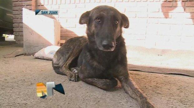 Jeden starší pár potkal toulavého psa, který vypadal moc zanedbaně: překonal 160 kilometrů kvůli svým zachráncům