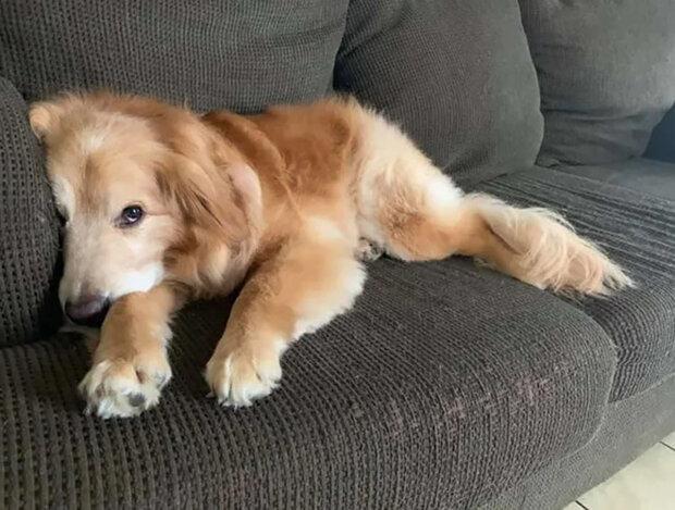 Pes děsil návštěvníky útulku podivným úsměvem: Čekal jen na svého majitele