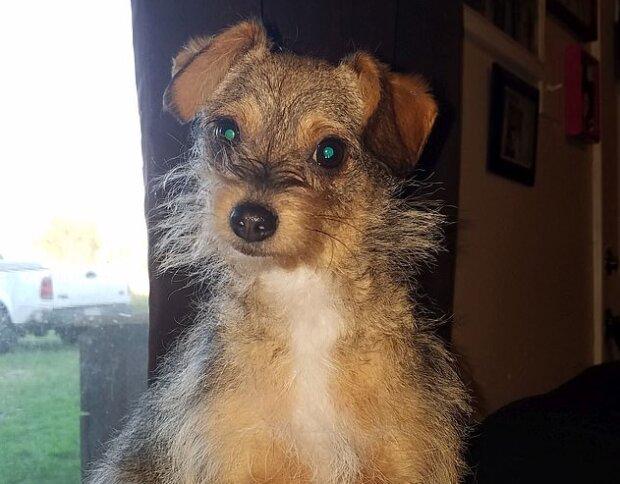 """""""Mise splnitelná"""": majitel vymyslel originální způsob, jak udržet svého psa během manikúry"""