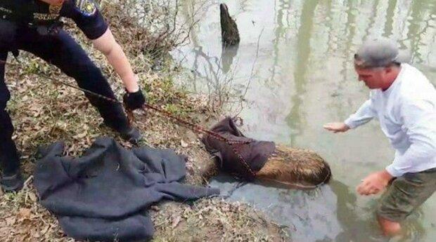 """Během procházky psi narazili na """"velkého bobra"""": nešťastné zvíře bylo třeba zachraňovat dvakrát"""