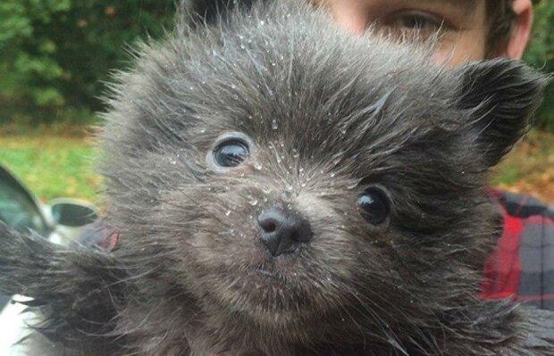 Přinesl si domů štěně, pak pochopil, že mazlíček není pes: kdo ale z něj vyrostl