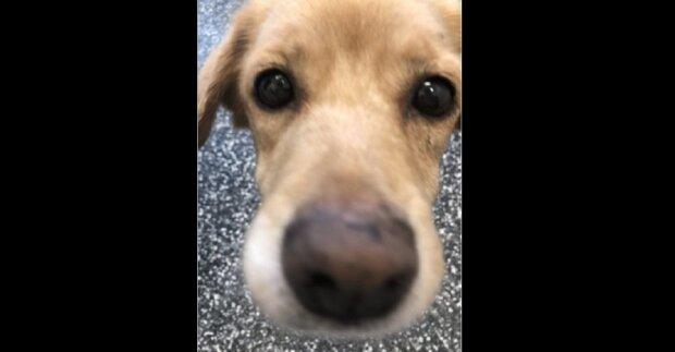 Mladík jednoho rána našel u sebe doma toulavého psa, ačkoliv všechna okna i dveře byly zavřené