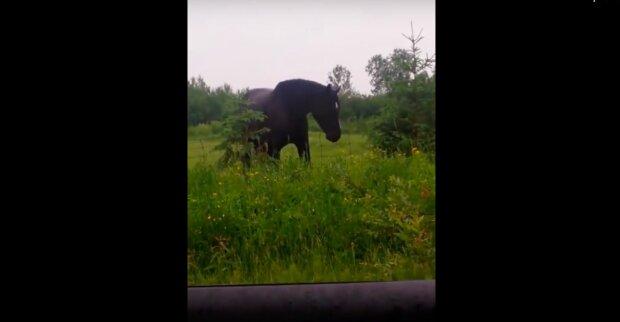 Dívky se potkali s krásným koněm a pustili hudbu: zvířecí reakce náhodou se natočili na video