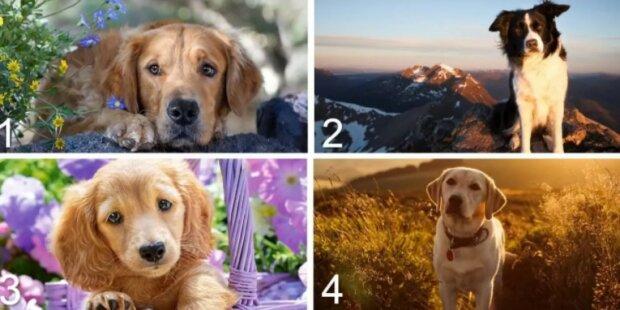 Psychologický test: vybraný pes prozradí vaši postavu