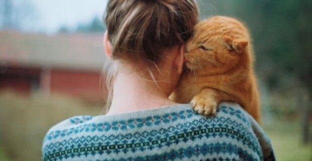 Vztah kočky a člověka. Jaké nemoci léčí chlupatí «doktoři»