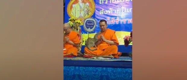 Zrzavá kočka vs buddhistický mnich: okouzlující konfrontace