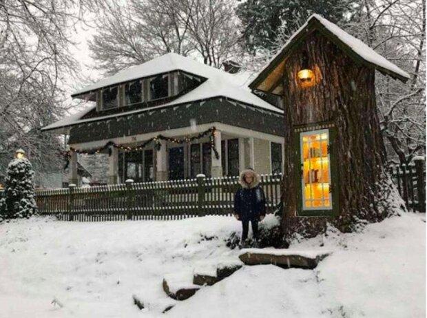 """""""Vypadá to pohadkově"""": jak žena přeměnila 110letý sušený strom v malou knihovnu"""